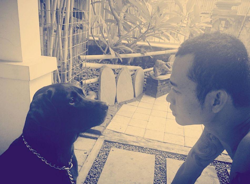 kaela & ayah Dog Ilovemydog Labrador Bali Happy Family Kaela