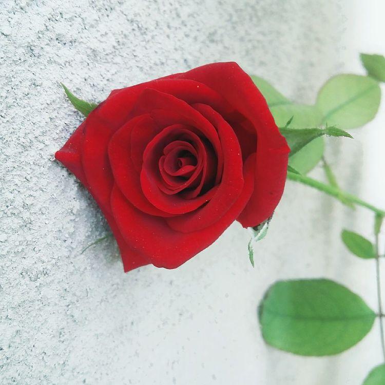 Lovelyrose 😚