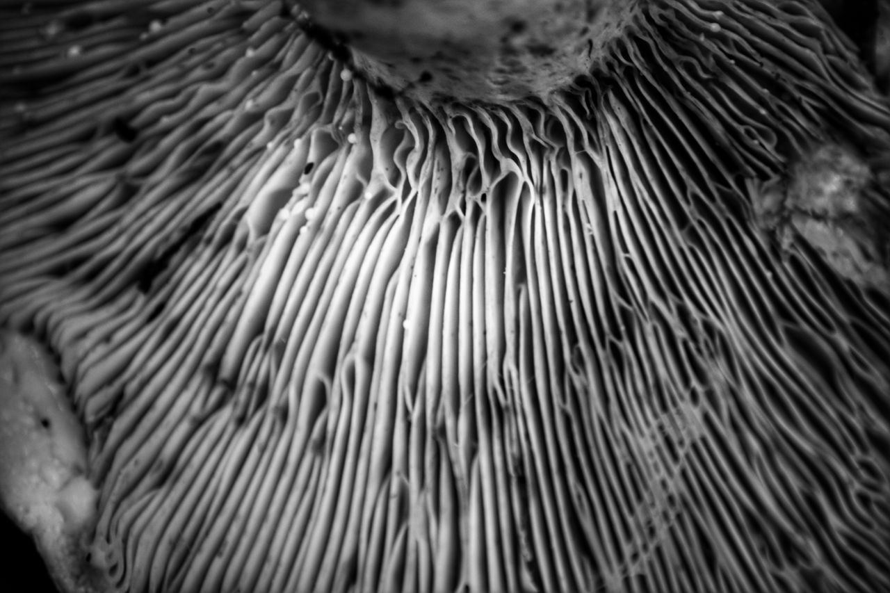 Close-up Backgrounds Pattern Full Frame No People Day Nature Monochrome Blackandwhite Fragility Outdoors Freshness Beauty In Nature Fungus Mushroom Tranquility Forest Selective Focus