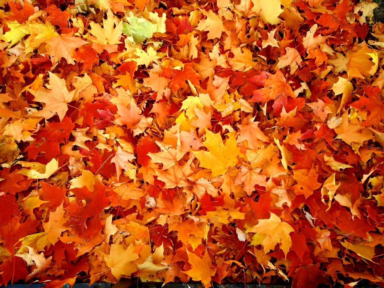 Fall Fall Colors Colours Redyellow Leaves Fall Leaves FallIsHere🍁 Simple Photography Filltheframe