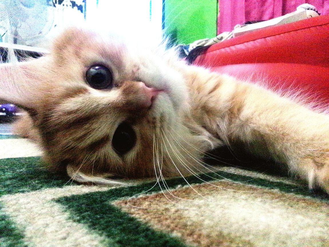 Cats Lovers  Pets Cattivo  Lovey Cat Kitty Lover