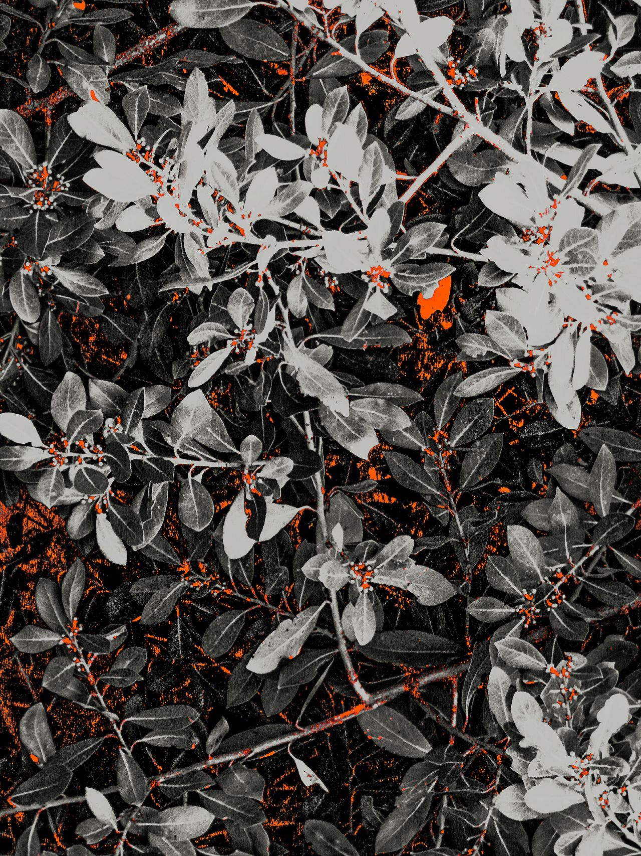 Monochrome Photography Carmine Colors And Patterns Pattern Pattern In Nature Leaf Plant Red And Black Nature Growth Autumn Close-up Leaves Beauty In Nature Backgrounds Botany Tranquility Scenics Fine Art