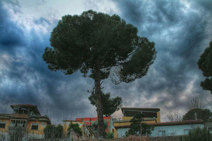 Tree Natural Skyporn Dreams Likeforlike Nice Photo Good Times Life Green Peace ✌ 🍃☔