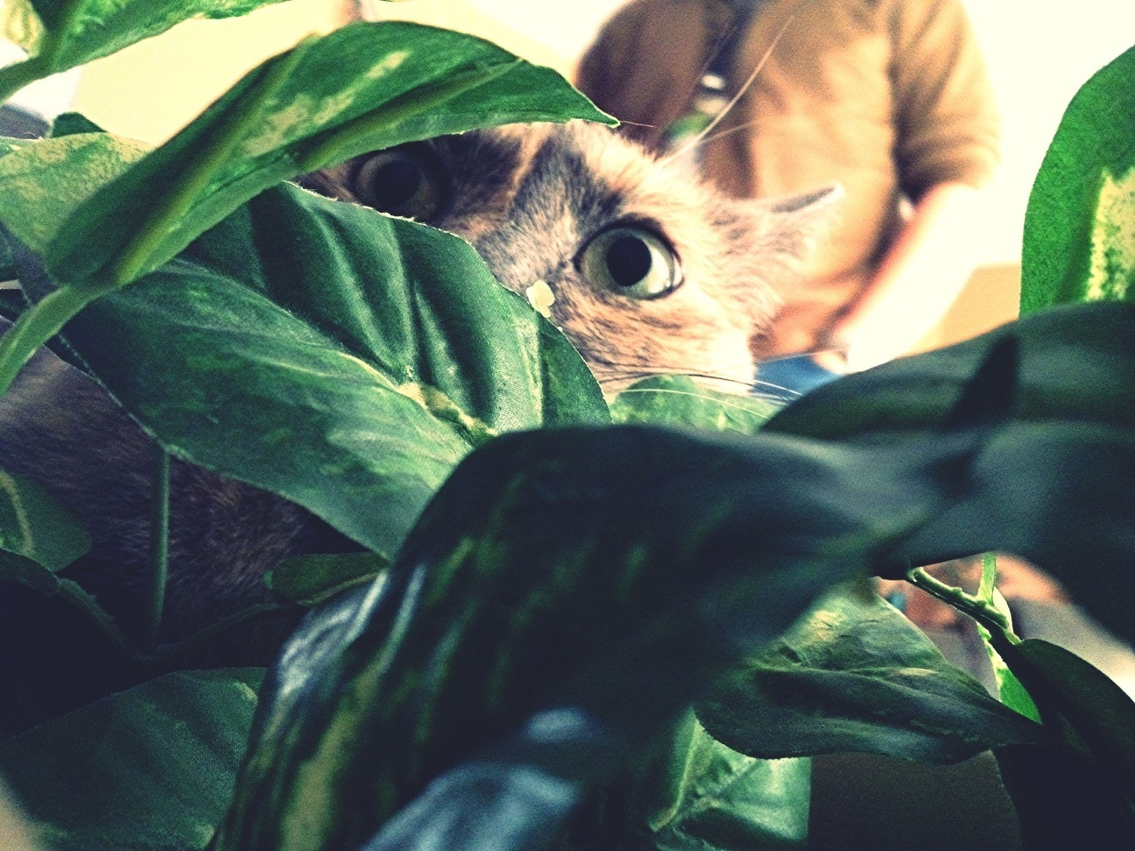 My Cat Thinks Shes On The Jungle