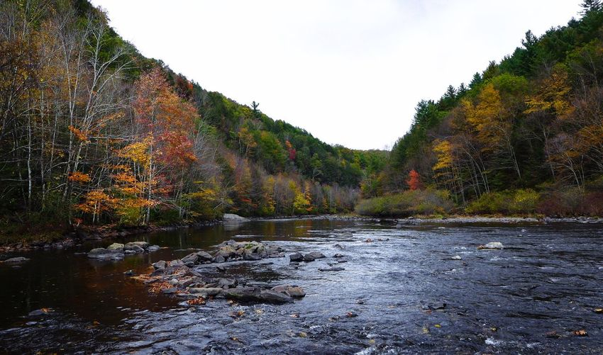 Lehigh Gorge State Park River View Pennsylvania Landscape Fall Colors EyeEm Nature Lover