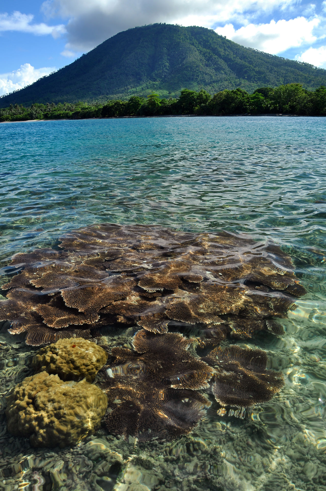 sea coral reefs Beach Beauty In Nature Coral Coral Reef Day INDONESIA Mountain Nature No People Outdoors Scenics Sea Sky Tranquil Scene Tranquility Travel Destinations Tree Water Wilderness
