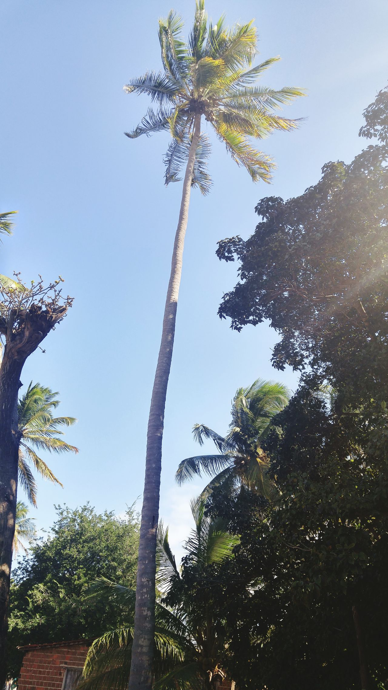 Tree Growth Low Angle View Palm Tree Tranquil Scene Scenics Clear Sky Tree Trunk Tranquility Tall - High Nature Beauty In Nature Blue Sky Day Non-urban Scene Branch Outdoors Solitude Tall