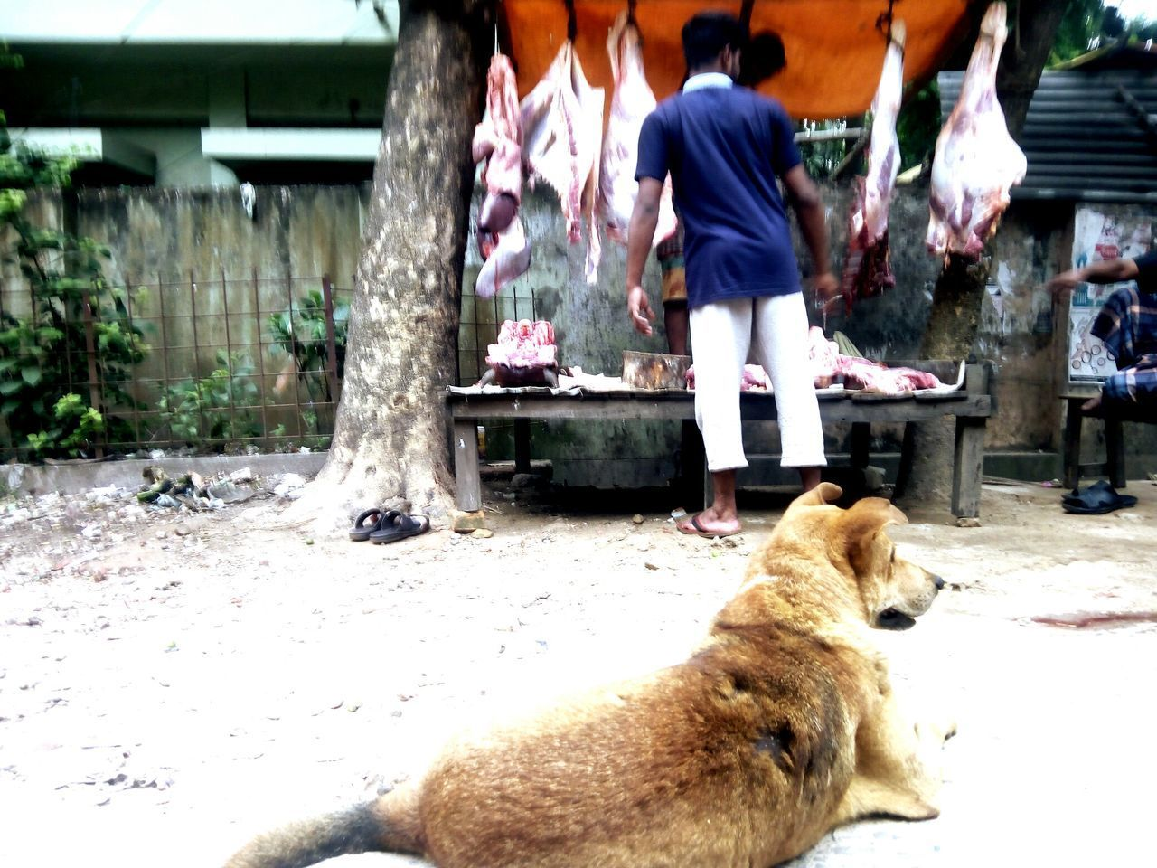 waiting Dog One Animal Sitting Meat! Meat! Meat! Meal Dog❤ Hungry Animals Hungry Dog Red Meat Streat Dog, Domestic Animals Roadside Dog The Street Photographer - 2017 EyeEm Awards