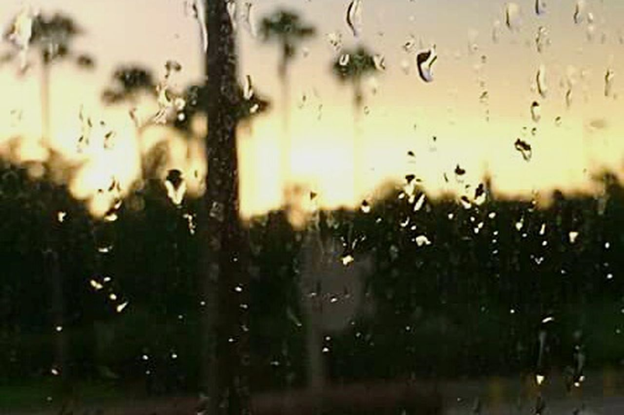 drop, window, wet, backgrounds, no people, water, condensation, day, defocused, indoors, tree, close-up, nature, freshness, sky