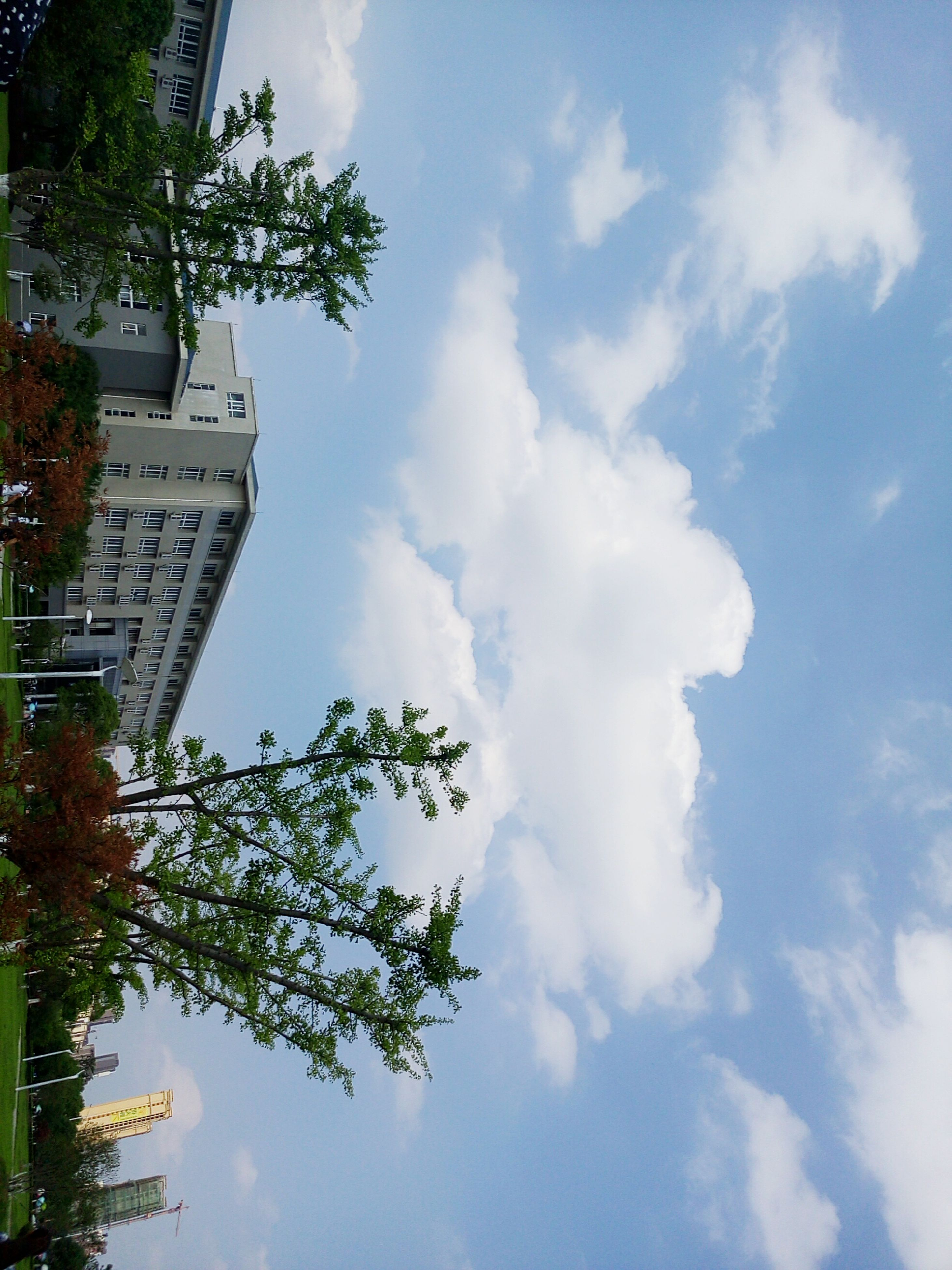 low angle view, tree, sky, building exterior, cloud - sky, architecture, built structure, growth, cloud, cloudy, city, nature, branch, day, outdoors, no people, beauty in nature, tall - high, sunlight, building
