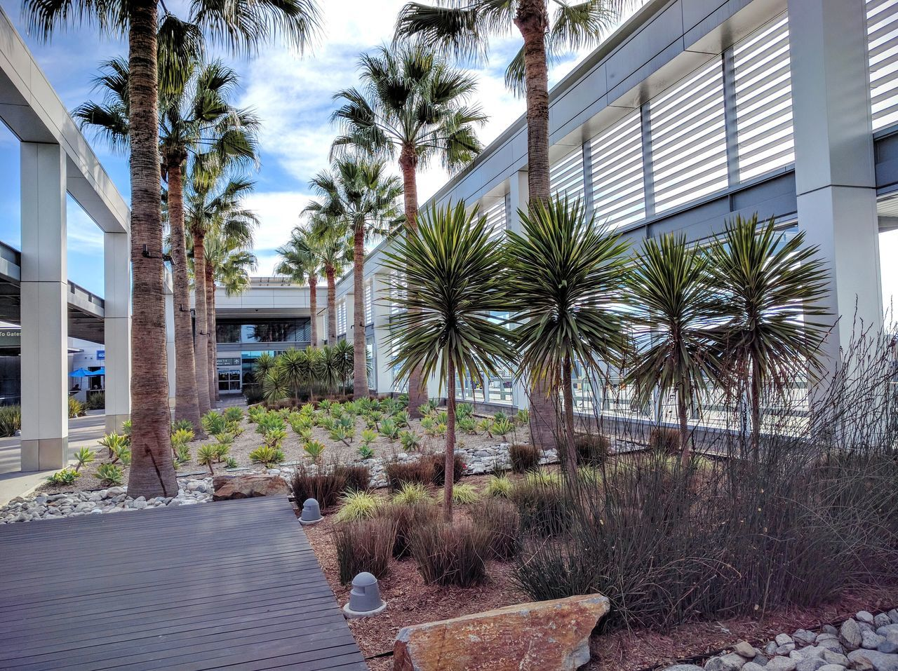 outdoor green area at long beach airport Palm Tree Architecture Built Structure Outdoors No People Eyem Gallery Taking Photos Eyeemphotography Mobile Photography Going To Vegas Airport EyeEm Gallery