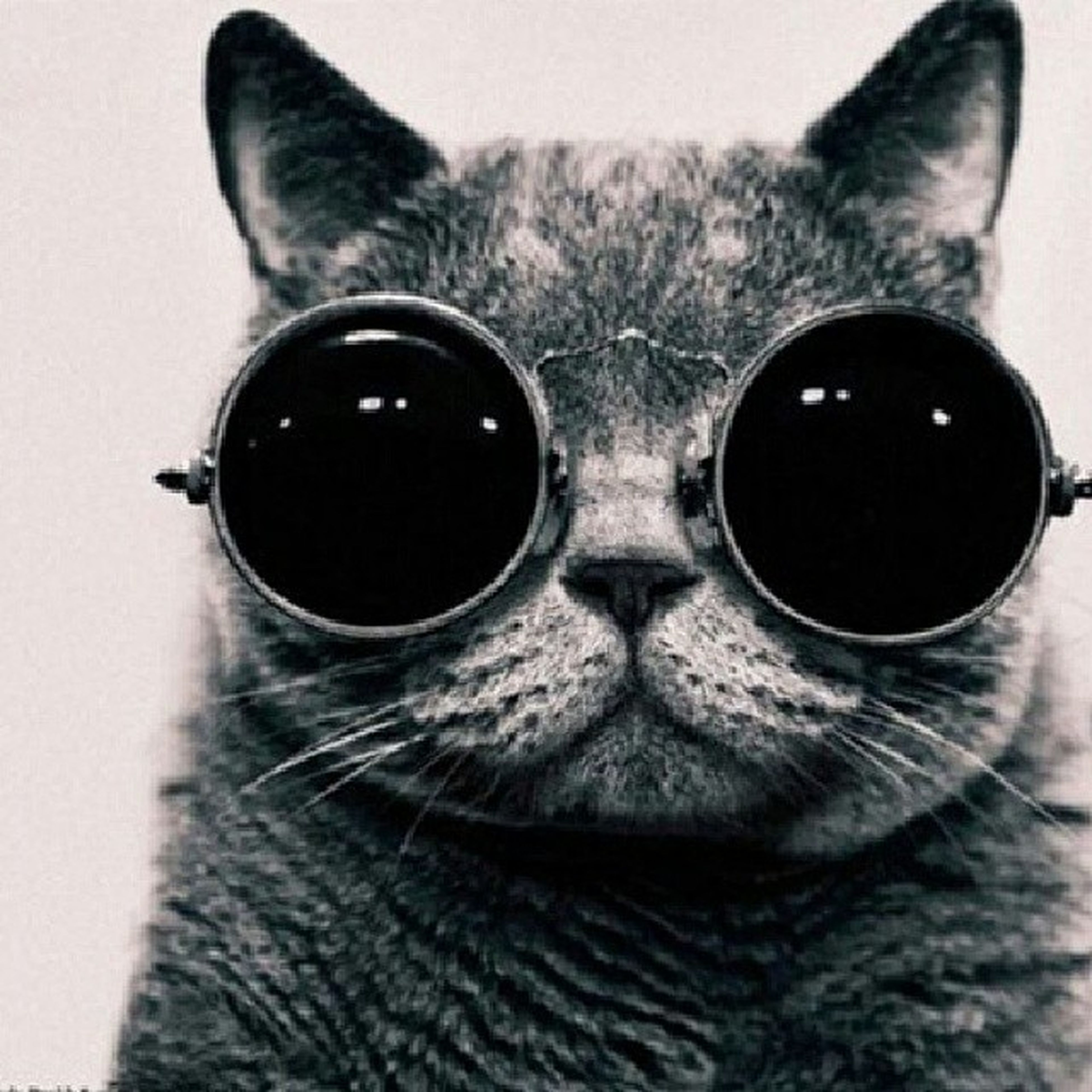 Cat Glasses Hecks Yay