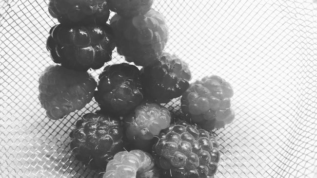 Autumn raspberries Monochrome Black And White Close-up Food Indoors  Growth No People Black And White Indoors  Food Close-up Healthy Eating Horizontal Monochrome _ Collection