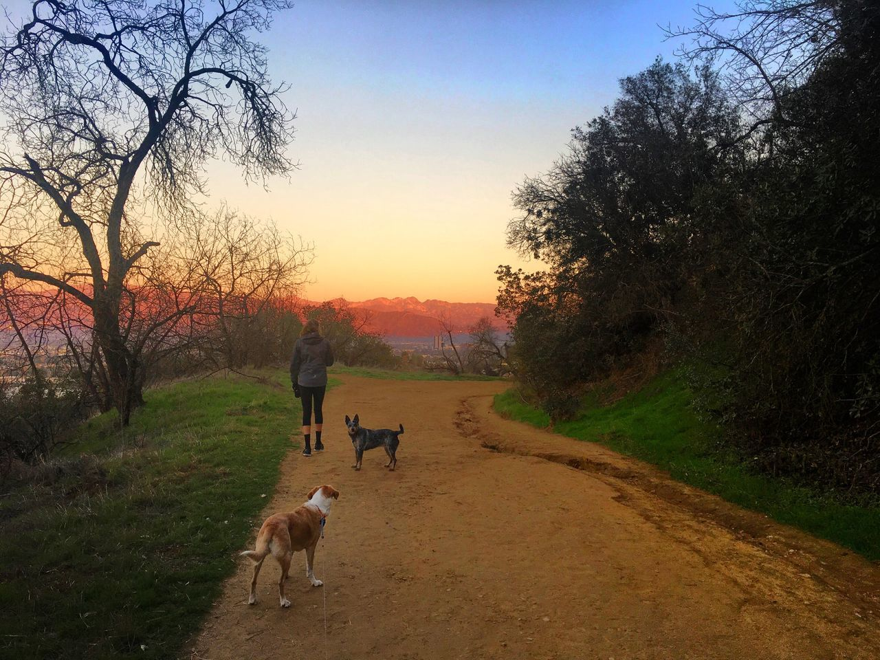 EyeEm Gallery Nature Sunset Landscape Tree Sky Tranquil Scene Pets Beauty In Nature Outdoors Grass Dog EyeEm Nature Lover EyeEm Best Shots - Nature EyeEm Best Shots - Landscape California Hiking