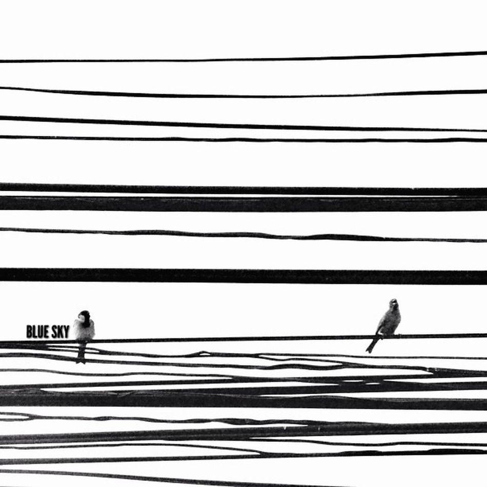 Power Lines The Minimals (less Edit Juxt Photography) Bw_collection EyeEm Best Shots