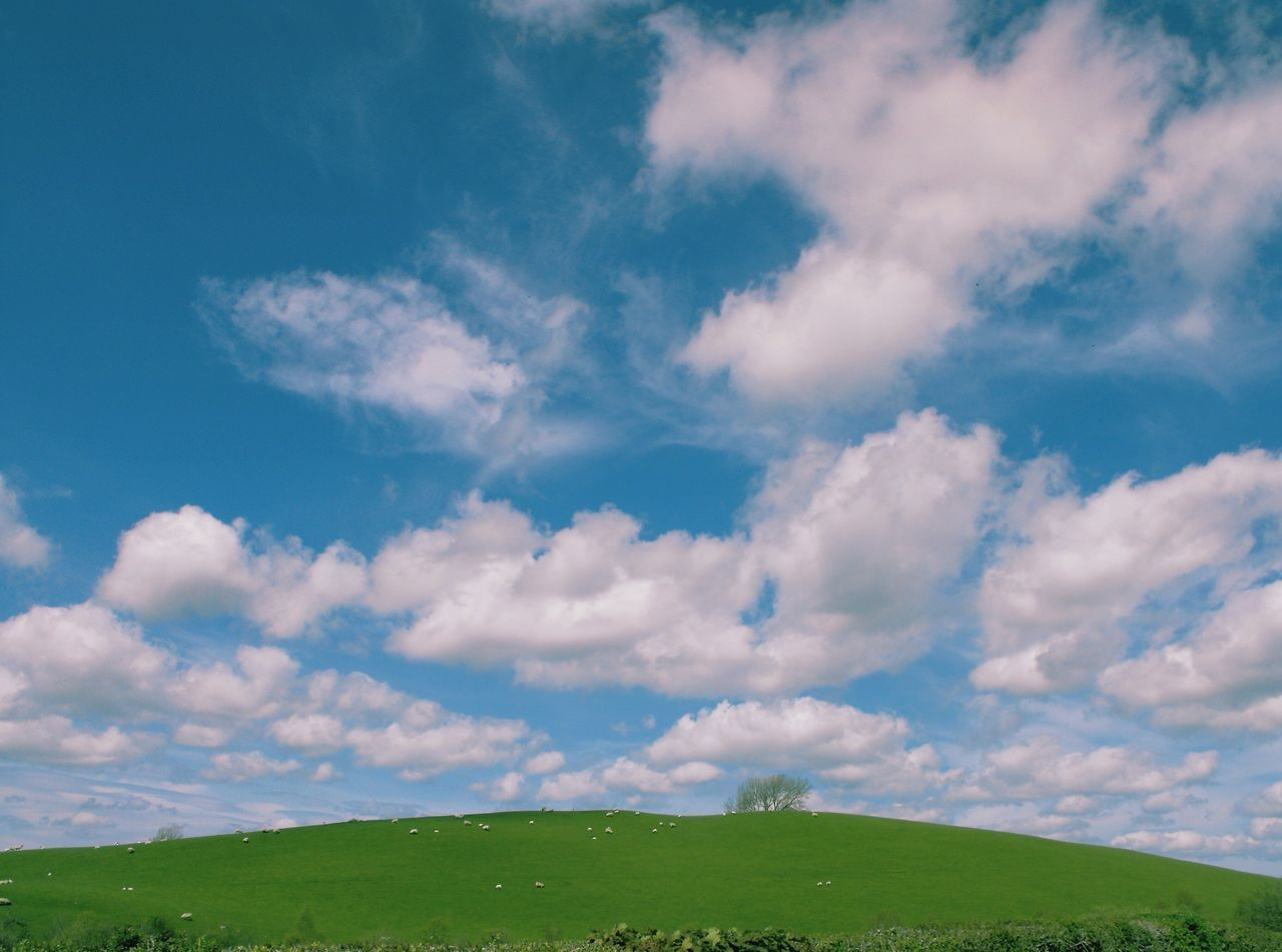 A picture to run into. .. Hill Wales Sheep Clouds Sky Cumulus Field Pasture Farmland Flat Sunny Landscape Rural холм овечки облака Пастбище Ovelhas Ovelles