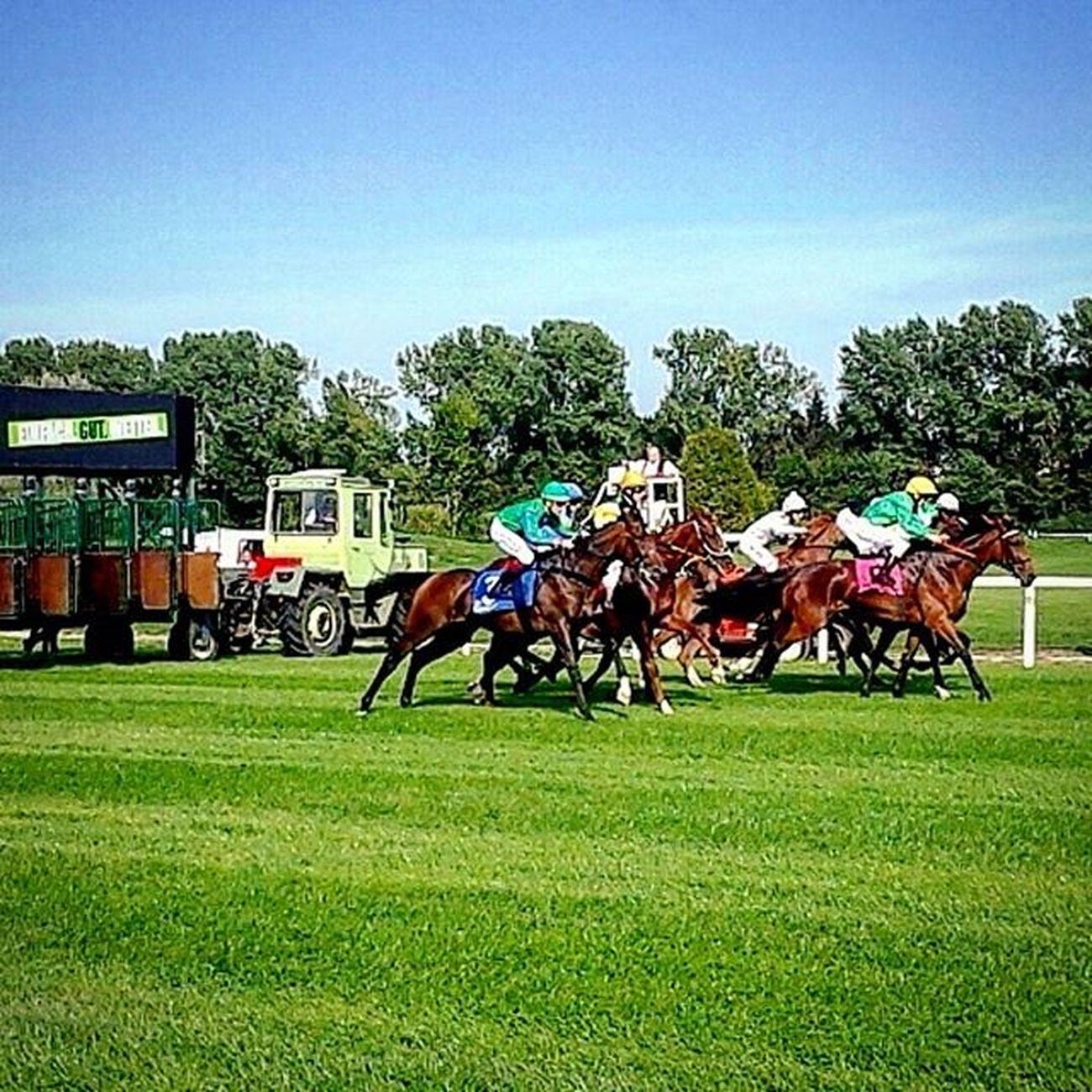 Horseriding Galopp Jockeys