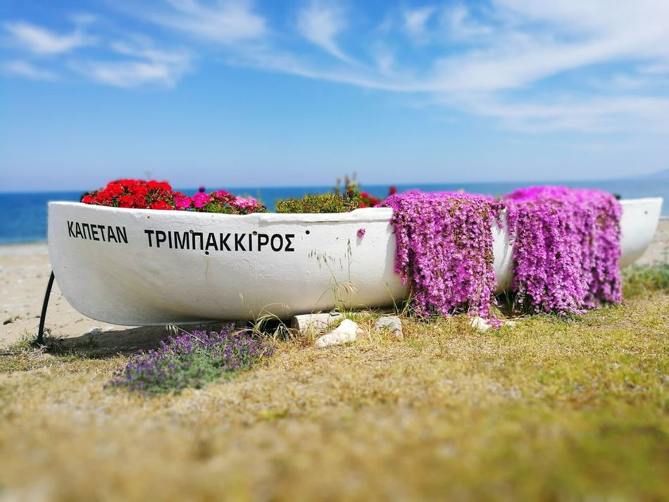 Outdoors Purple Day No People Sky Nature Grass Flower Freshness Cyprus Nature Cyprus EyeEmNewHere Art Is Everywhere Landscape Sea Clear Sky Beach Sand Horizon Over Water Pink Color Plant Break The Mold Cyprusexploring Beauty In Nature Travel Destinations
