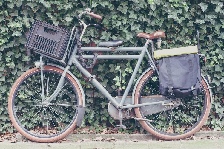 Classic vintage bicycle leaning on a wall of climbing plants Mode Of Transport Transportation Land Vehicle Outdoors Day No People Cool Stylish Hipster Modern Europe Netherlands Amsterdam Bicycle Climbing Plants Classic Vintage Retro Street Handlebar Extra Seat Child Seat Saddlebags
