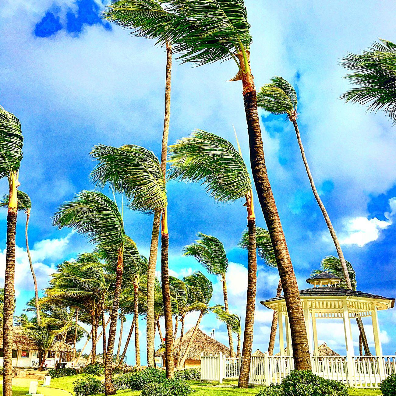 Strong winds Travel Sunshine Beach Sunshine ☀ Palm Tree Colors Exploring Bright Clouds Adventure Traveladdict Wind Notinkansasanymoretoto Landscape Strong Wind EyeEm Best Shots Beachphotography Pergola Eyem Gallery Outdoors Travelphotography Light