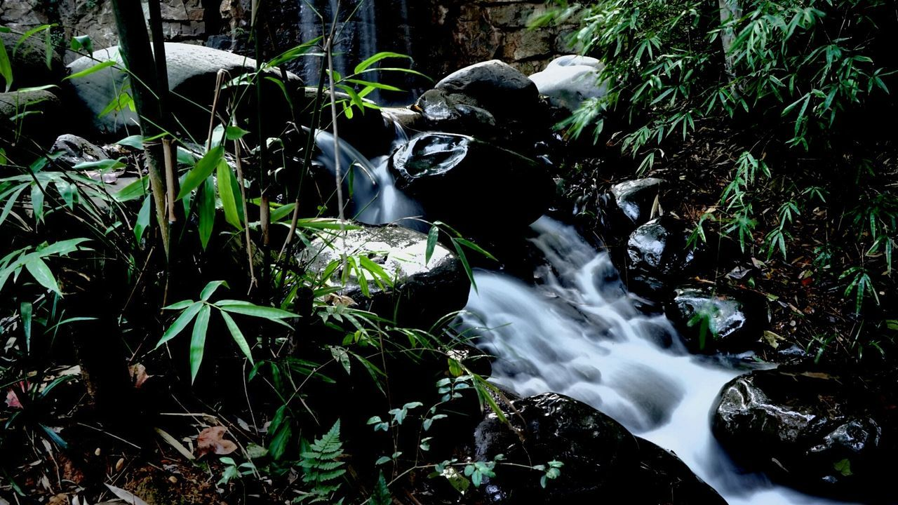 motion, nature, water, waterfall, no people, long exposure, growth, beauty in nature, plant, forest, blurred motion, outdoors, leaf, day, scenics, freshness