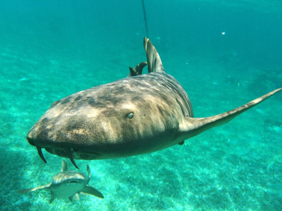 Beautiful stock photos of shark, Animal Teeth, Animal Themes, Animals In The Wild, No People