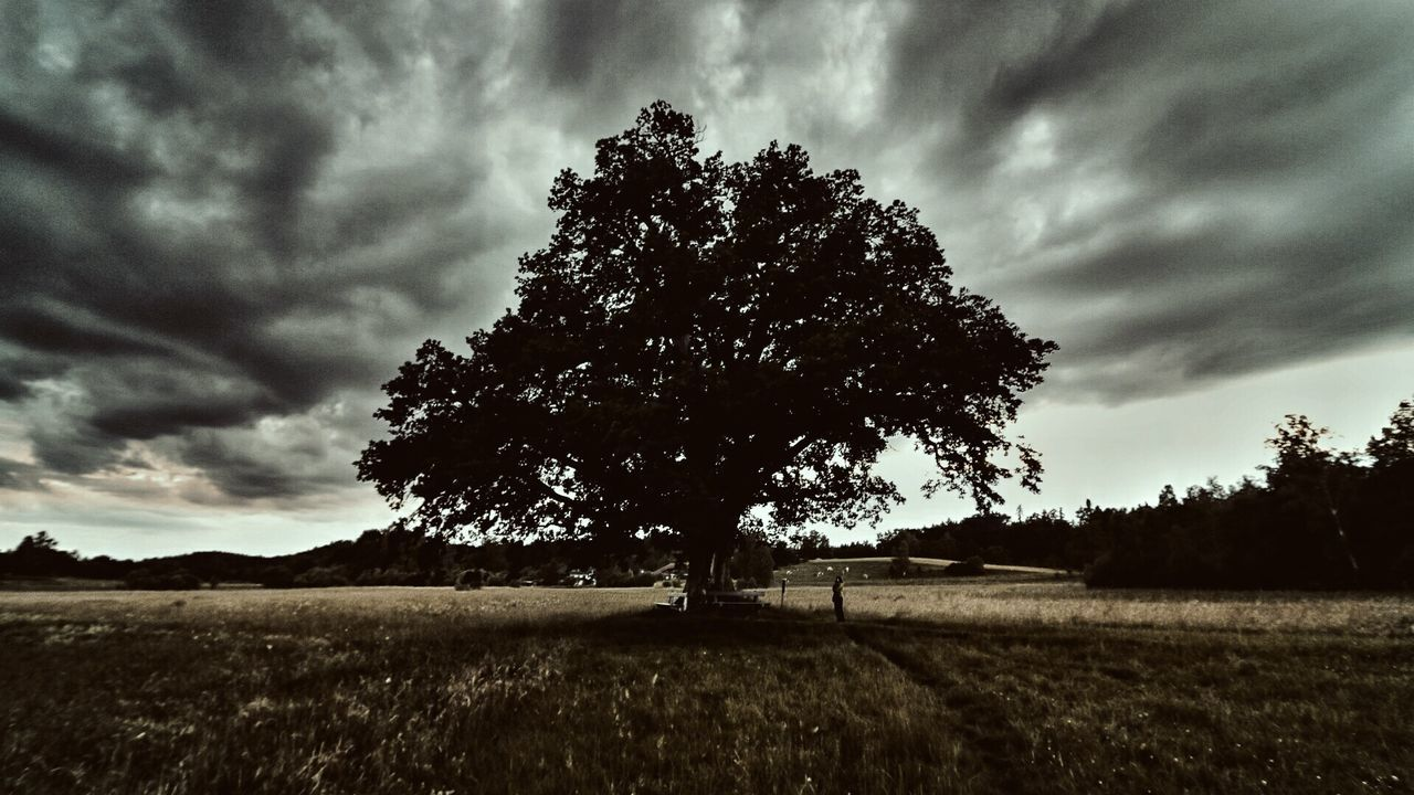 Tree Nature Landscape Sky Single Tree Beauty In Nature Outdoors