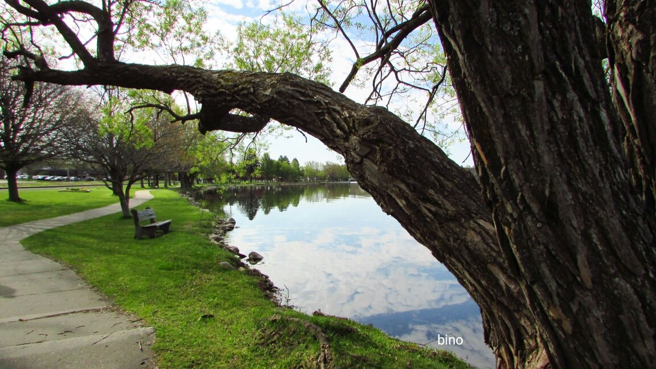 Morning View At The Lake Tranquility Tree Trunk Landscape No People Cool Day Lake Cadillac Pure Michigan