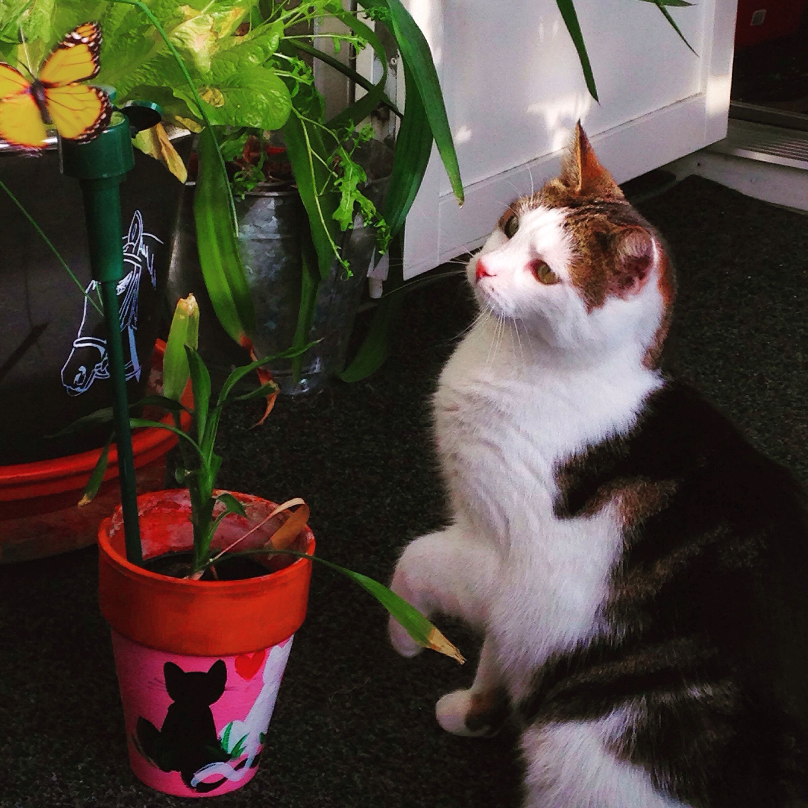 domestic cat, cat, pets, domestic animals, feline, one animal, animal themes, mammal, whisker, indoors, potted plant, sitting, relaxation, plant, home interior, front or back yard, close-up, no people, house, lying down