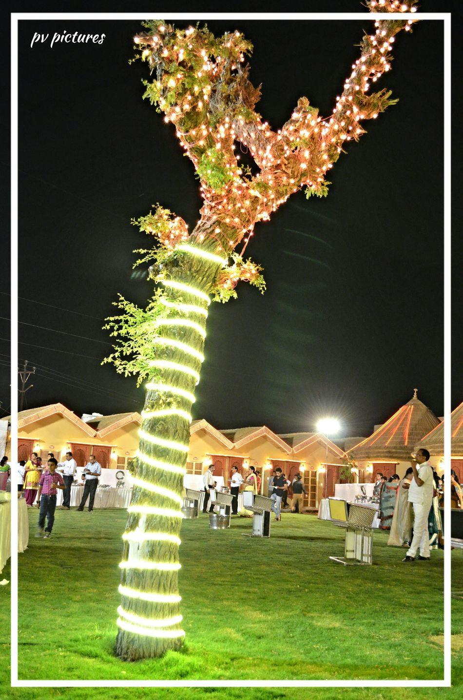 Picspv Rajasthan Tree Bikaner Night Lights Treelight