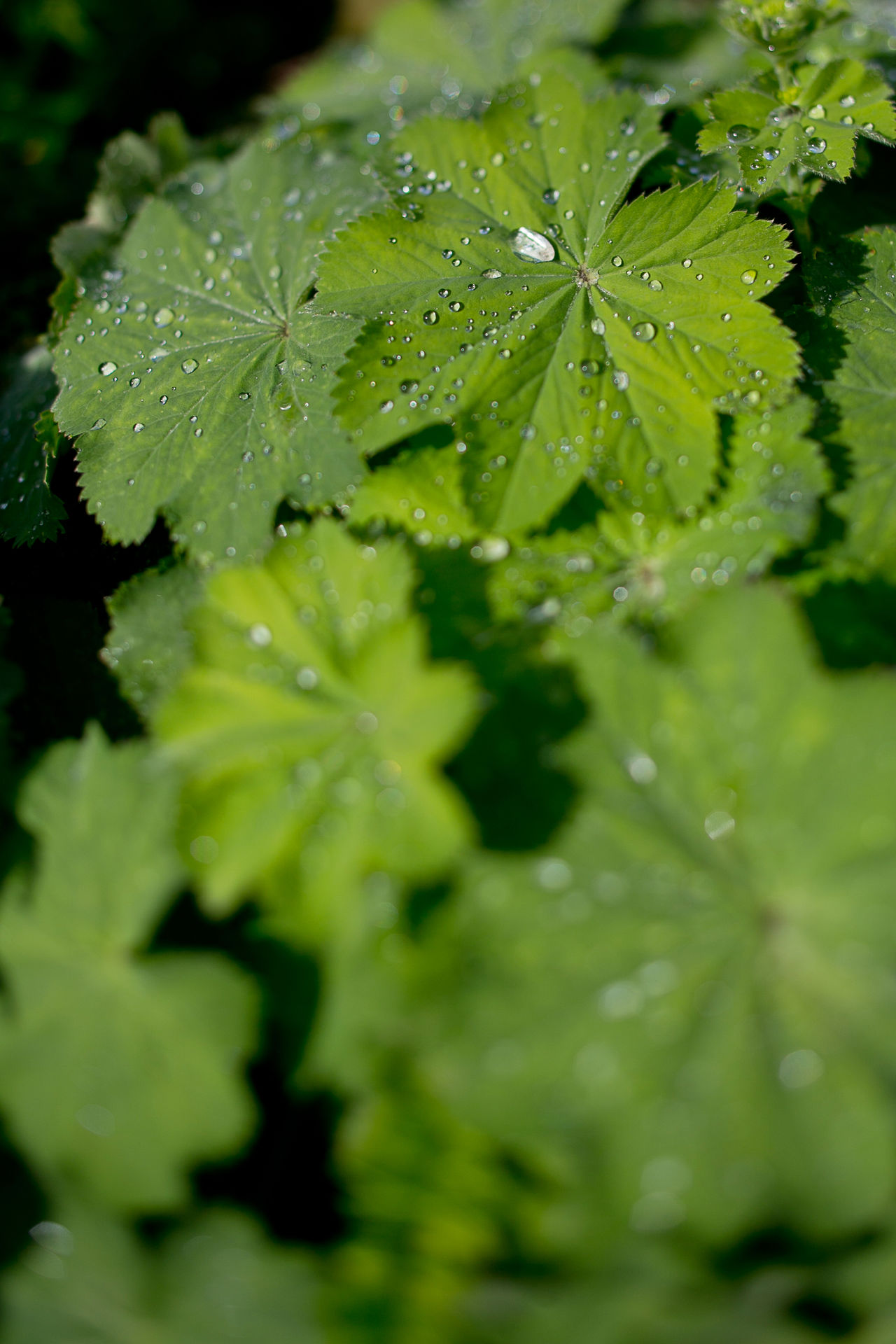Beauty In Nature Close-up Day Drop Fragility Freshness Full Frame Green Color Growth Leaf Nature No People Outdoors Purity Water Wet