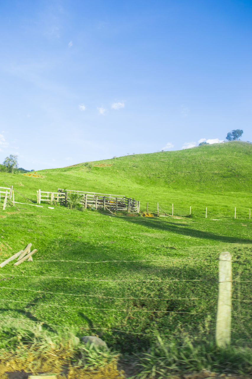 field, agriculture, nature, grass, beauty in nature, tranquil scene, farm, scenics, rural scene, green color, tranquility, no people, landscape, day, sky, outdoors, livestock, growth, animal themes, domestic animals, mammal, hay bale