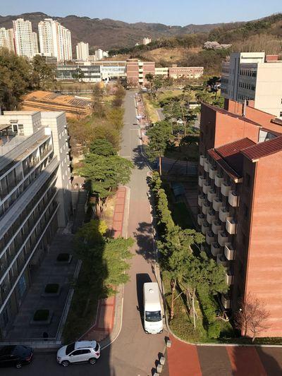 Day Road Sunny Day Ipone University Shadow Shadows & Lights Trees City Tree Sky Cityscape
