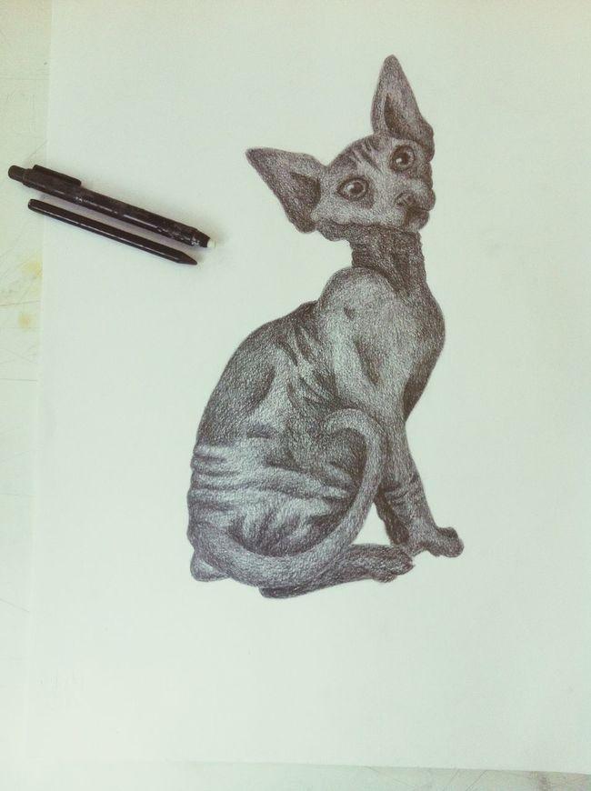 Catsagram Drawing Love <3 Cat Sphinx