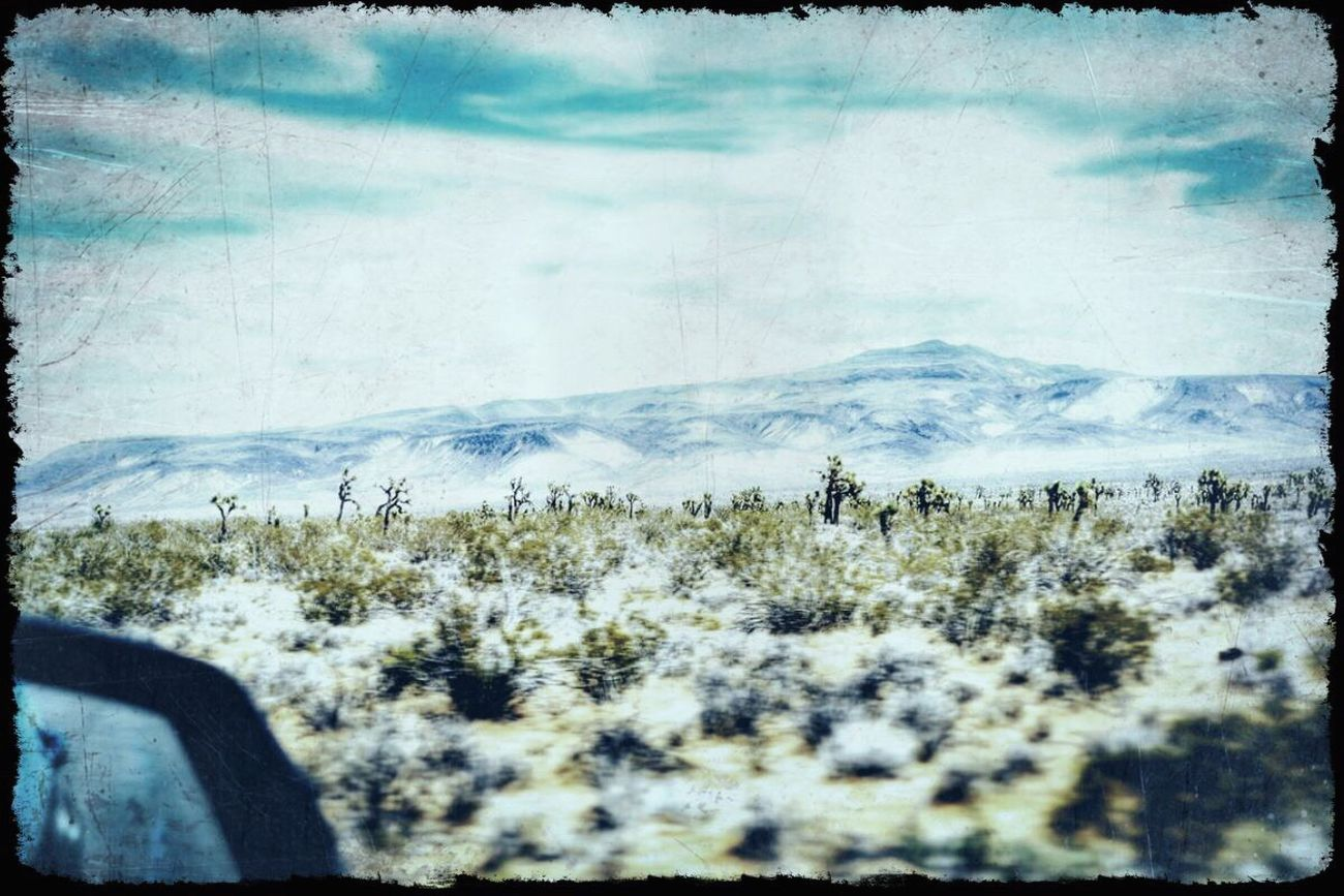 GrungeStyle Check This Out Moving Forward  Joshua Tree Blurred Motion Blurred Perspective Enjoying Life Road Trip From My Point Of View Tranquil Scene Goodnight EyeEm