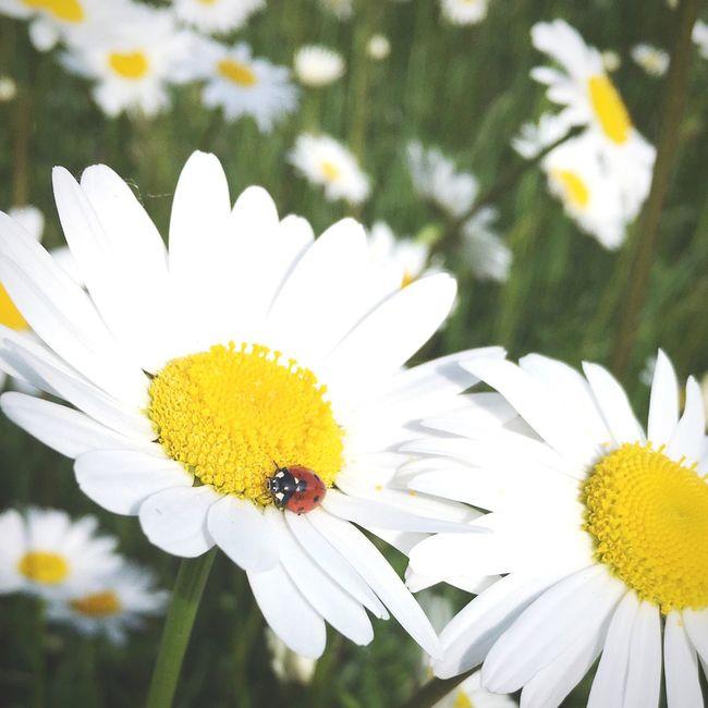 Flower Ladybug Nature_collection Wildlife & Nature Flower Power