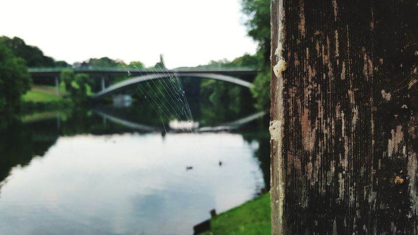 Nature Green Nature Water Bridge Hagen Wood