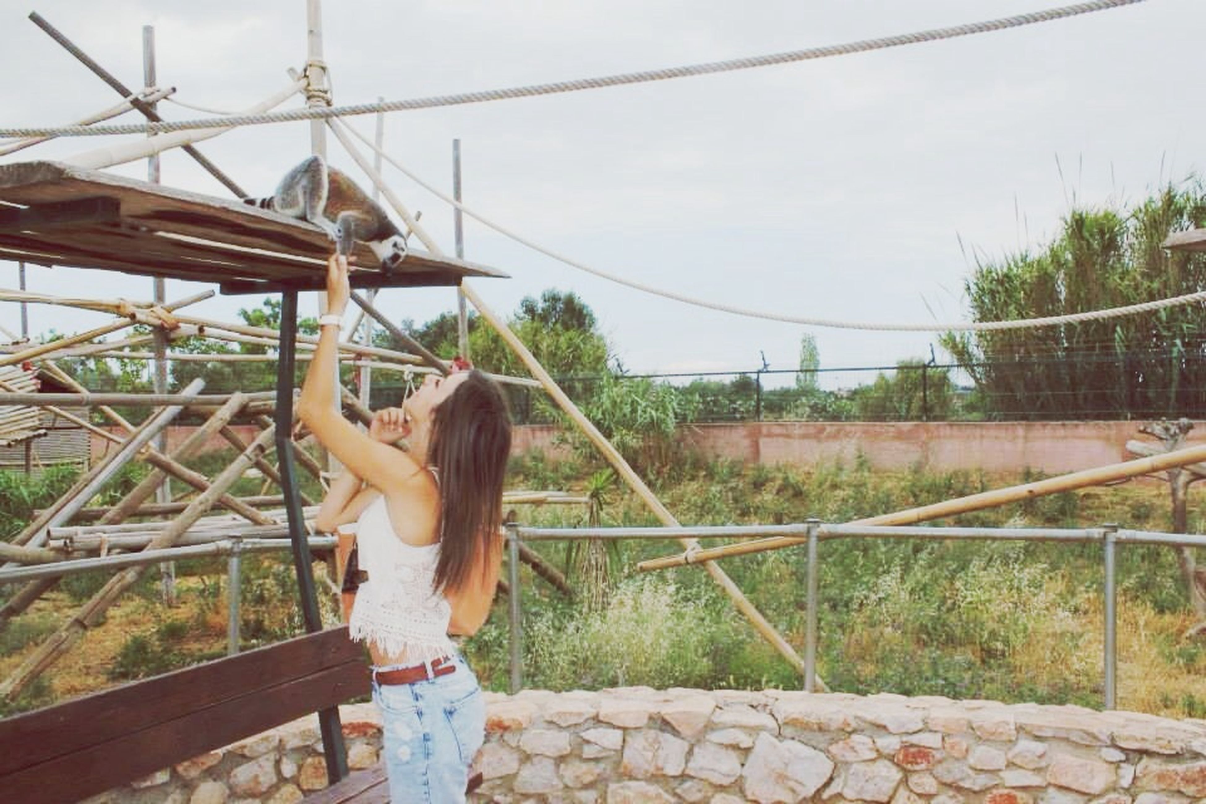 built structure, architecture, building exterior, metal, low angle view, railing, day, house, outdoors, hanging, no people, sunlight, rope, wood - material, metallic, staircase, plant, fence, steps, connection