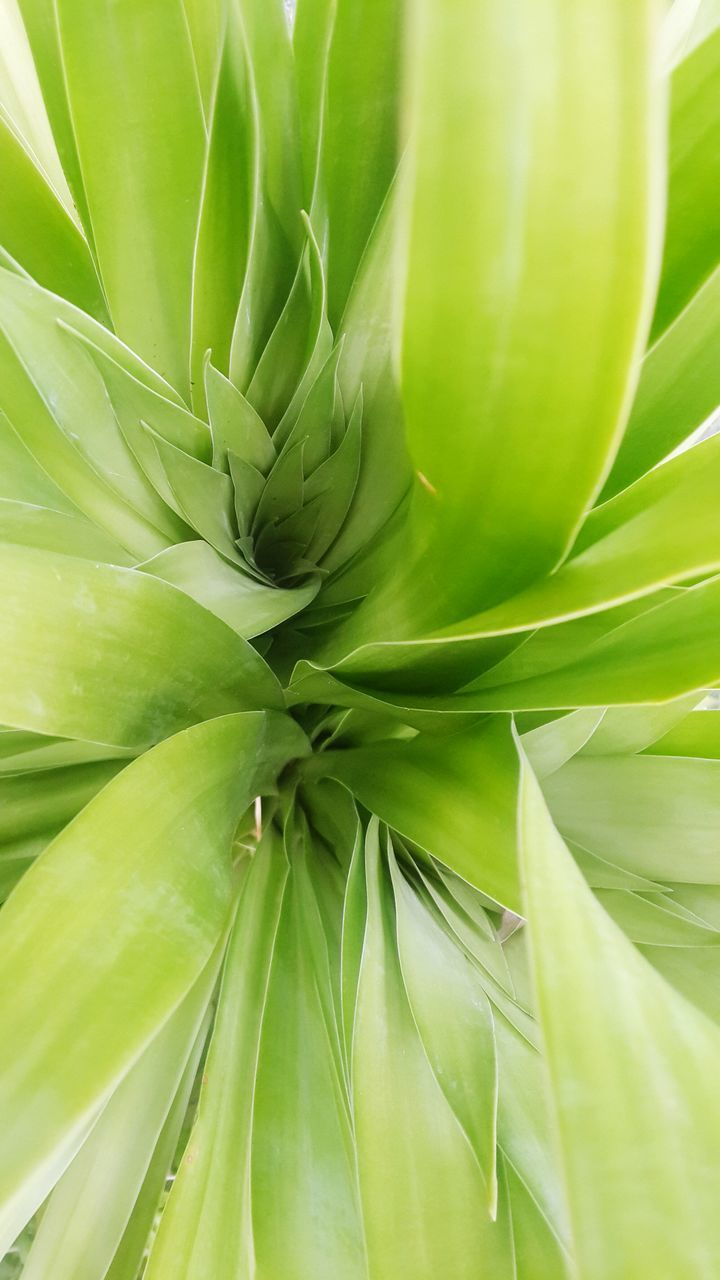 green color, growth, leaf, nature, plant, no people, full frame, close-up, backgrounds, day, cactus, beauty in nature, outdoors, freshness