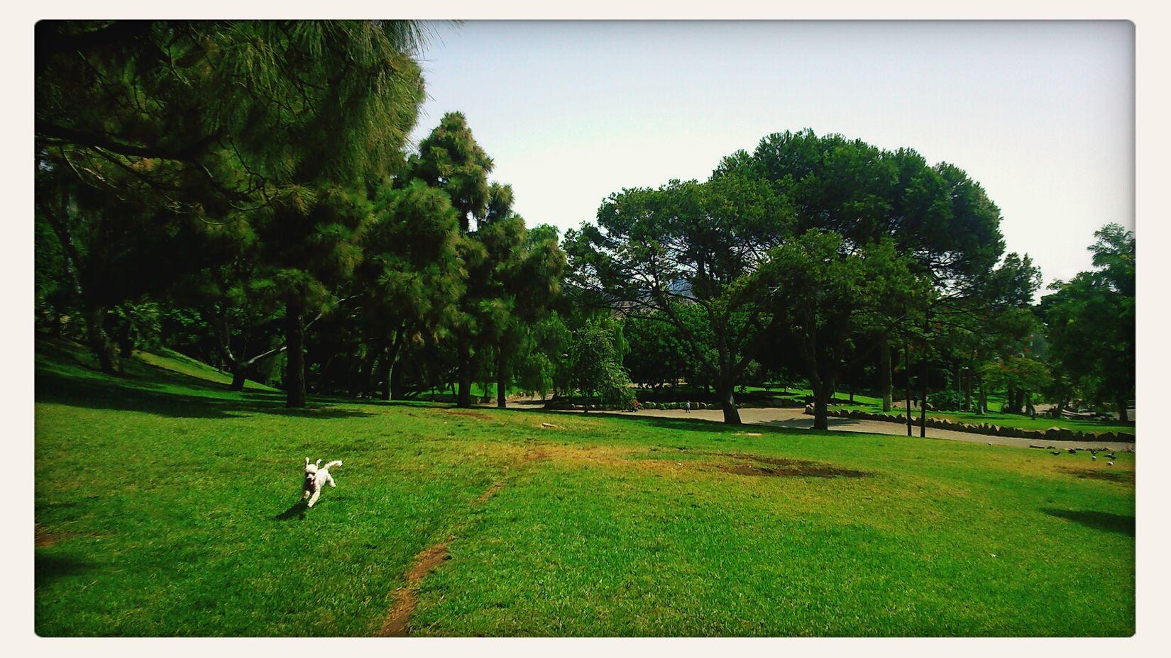 Vicky. Enjoying The Sun Run Forrest, RUN! Par Photooftheday