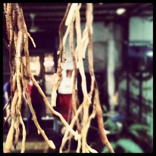 Roots bloody roots Root Sacrefig Peepal Tree rains monsoon Mumbai Bombay