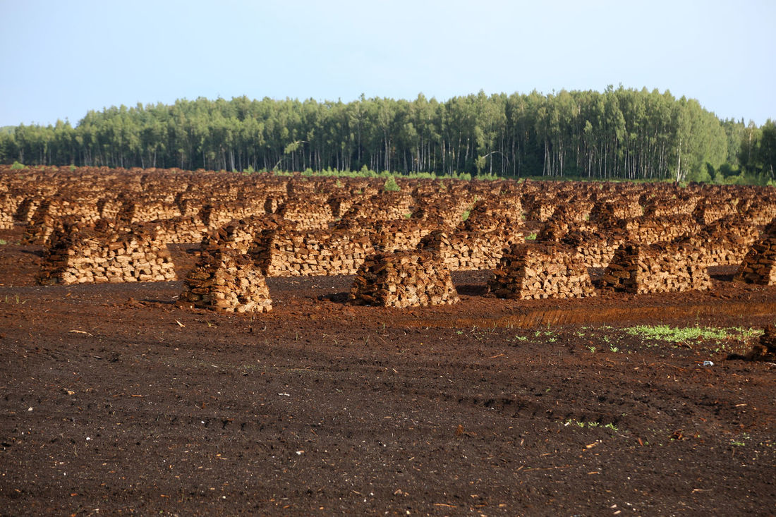 peat is stacked in rows waiting for transport in a forest in Latvia. Agriculture Bog Peat Brennstoff Evening Light Fossil Fuel Fossil Fuels Harvesting Peat Heating Period Lagerung Landwirtschaft Latvia Lettland  Peat Peat Bog Peat Extraction Peat Field Peat Mining Renewable Energy Swamp Torfabbau Torfballen Torffabrik Torffeld Travelling The Baltic States Wald Und Torf