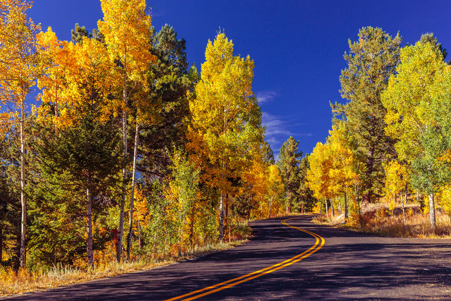 Aspen Trees Autumn Autumn Colors Beauty In Nature Colorado Country Road Diminishing Perspective Fall Colors Golden Gate Canyon State Park Landscape No People Non-urban Scene Outdoors Road Scenics Season  September The Way Forward Tree Yellow