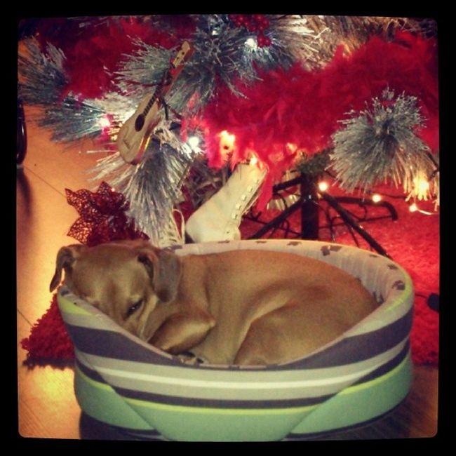 Fuckchristmas Christmas Dog