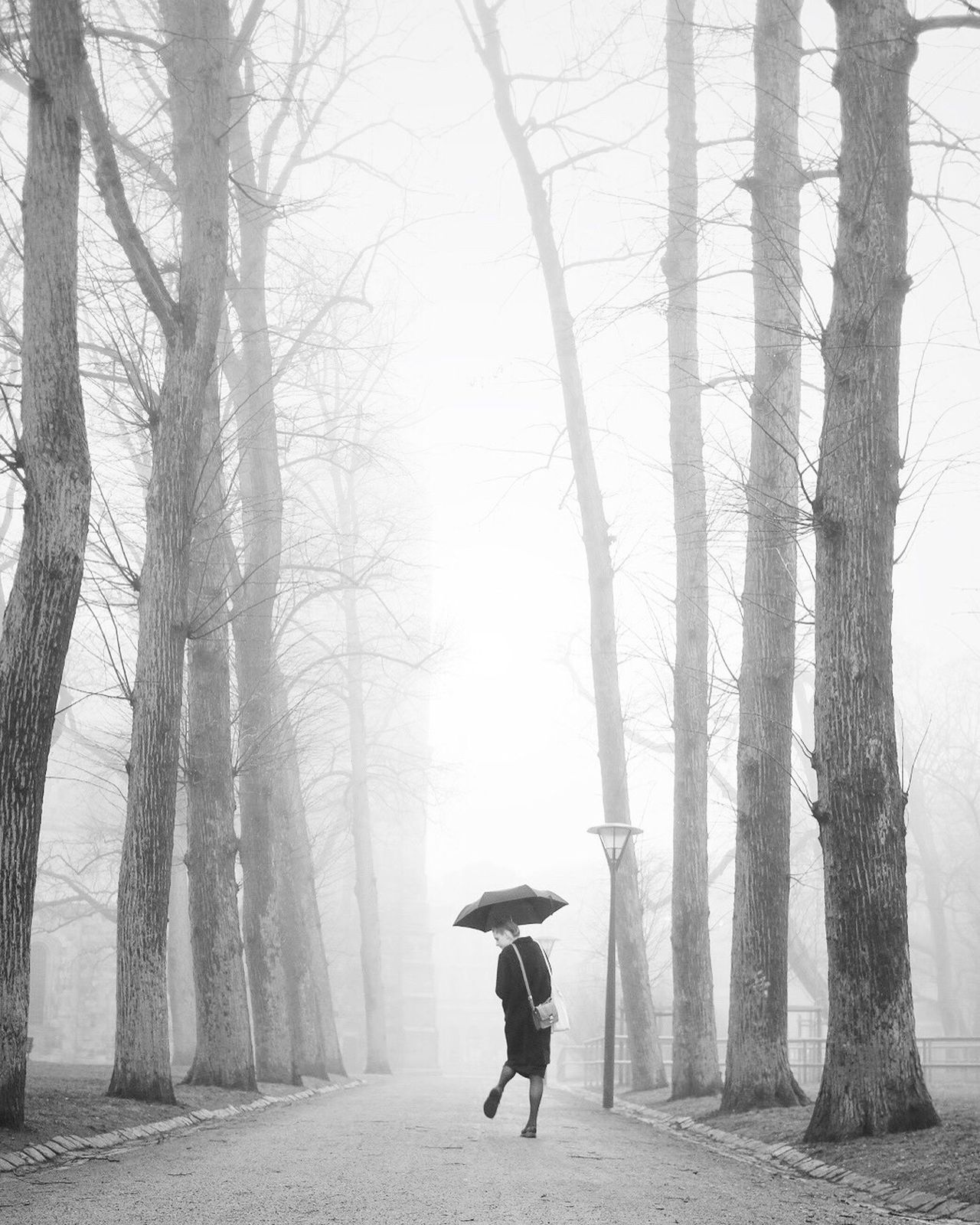 Fog Tree Winter Nature Cold Temperature Beauty In Nature Black And White Monochrome Darkness And Light Street Photography Bw_collection One Person