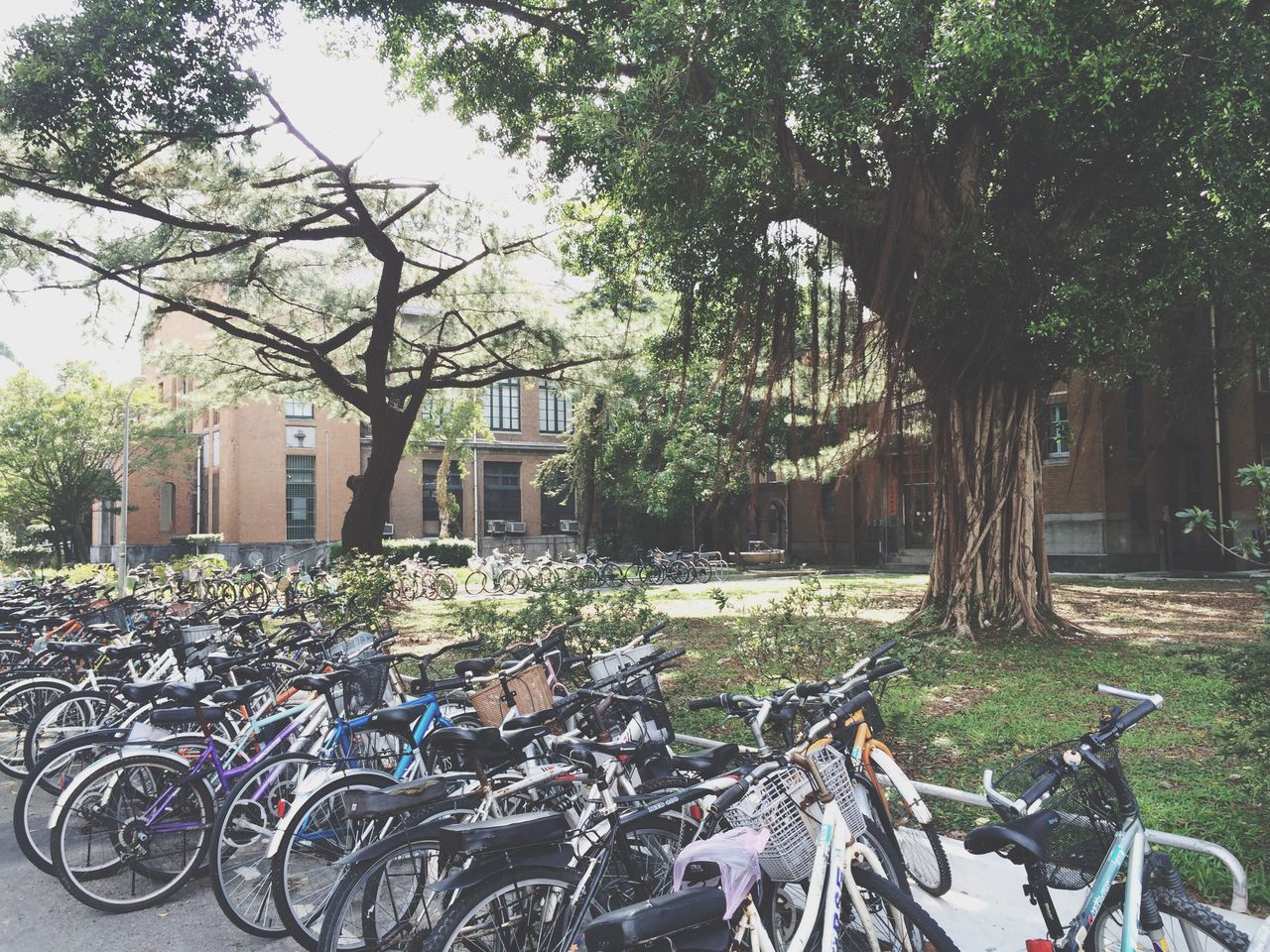 國立臺灣大學 National Taiwan University  Taiwan Taipei Taipei,Taiwan trees, bicycles, walk