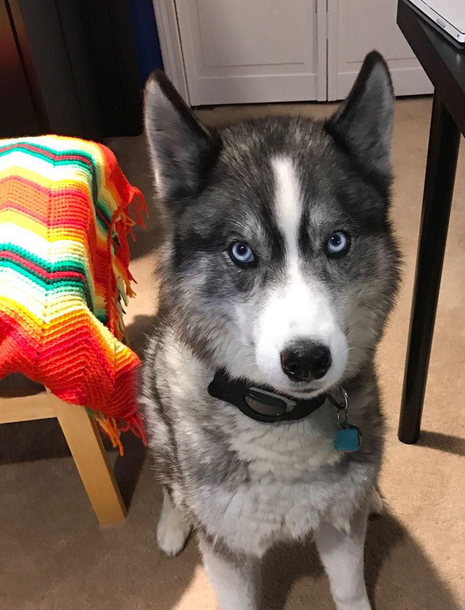 My Wolf Pup Tamacothewonderdog