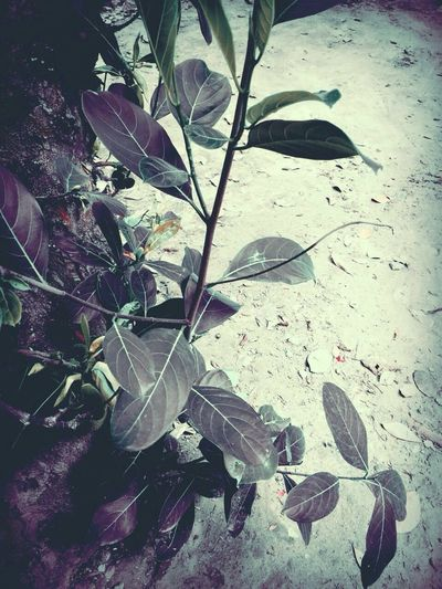 The green life Nature Leaves Evenings Love