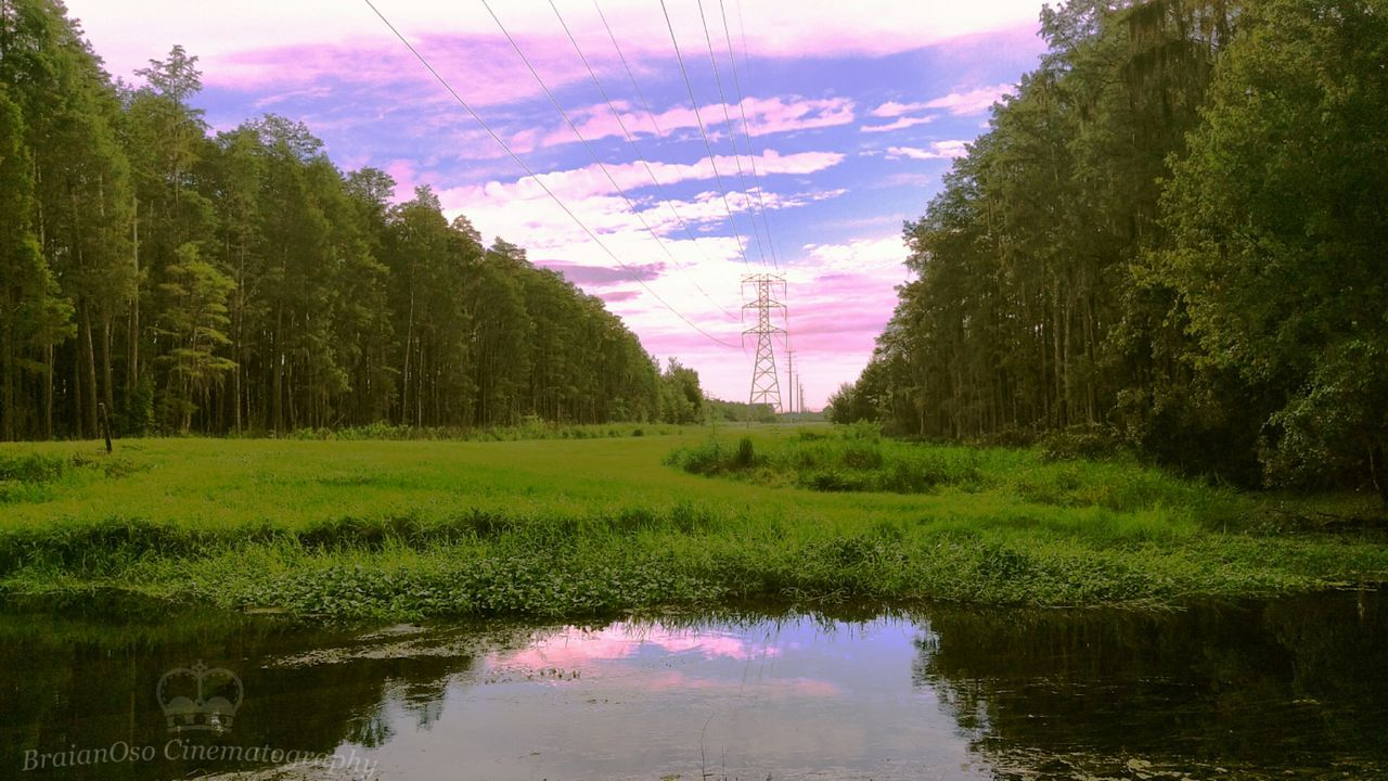tree, reflection, nature, sky, beauty in nature, tranquil scene, no people, growth, tranquility, water, scenics, waterfront, cloud - sky, day, outdoors, landscape, lake, electricity pylon