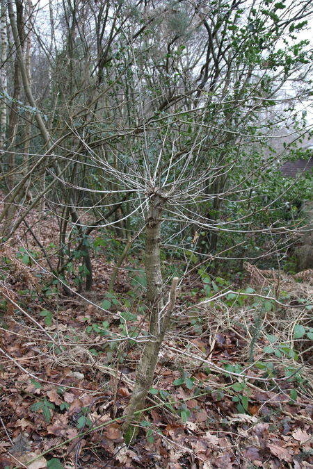 Backgrounds Bare Tree Beauty In Nature Branch Close-up Day Forest Growth Leaves Nature No People Outdoors Surrey Heath Tranquility Tree